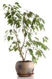 Árvore Home em um potenciômetro Foto de Stock