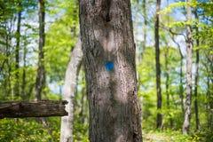 A árvore identificada por meio de um quadrado azul fotografia de stock