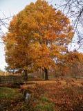 Árvore II da ponte foto de stock