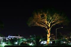 Árvore iluminada Imagem de Stock