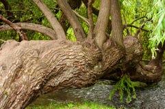 Árvore impar na região selvagem imagem de stock royalty free