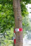 Árvore infestada Foto de Stock