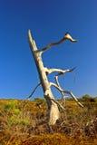 Árvore inoperante Imagens de Stock