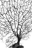 Árvore inoperante fotos de stock