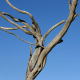 Árvore inoperante imagem de stock royalty free
