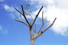 Árvore inoperante Fotos de Stock Royalty Free