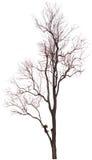 Árvore inoperante. imagens de stock royalty free