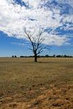 Árvore inoperante Foto de Stock