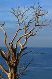 Árvore inoperante Foto de Stock Royalty Free