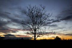 Árvore inoperante Imagens de Stock Royalty Free