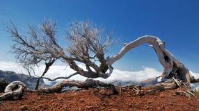 Árvore inoperante acima das nuvens foto de stock royalty free