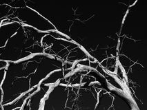 Árvore inoperante assustador Imagens de Stock Royalty Free