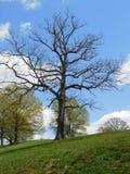 Árvore inoperante bonita contra o céu foto de stock royalty free
