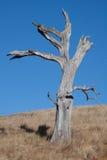 Árvore inoperante, céu azul fotos de stock