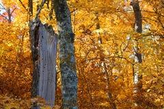 Árvore inoperante cercada pelas folhas do ouro na queda Imagens de Stock Royalty Free