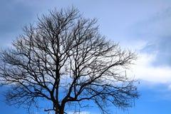 Árvore inoperante com céu azul Imagens de Stock Royalty Free