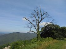Árvore inoperante de encontro a um céu azul Fotos de Stock Royalty Free
