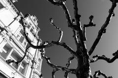 Árvore inoperante de Luxemburgo sobre a construção imagens de stock