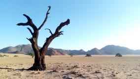 Árvore inoperante do deserto imagens de stock royalty free