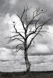Árvore inoperante e dois pássaros imagens de stock