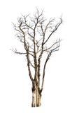 Árvore inoperante e seca foto de stock royalty free