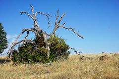 Árvore inoperante em Bush foto de stock