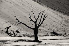Árvore inoperante em Deadvlei famoso Imagens de Stock Royalty Free