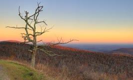 Árvore inoperante em montanhas de cume azul fotos de stock royalty free