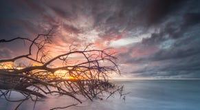 Árvore inoperante em um dia do por do sol Imagem de Stock