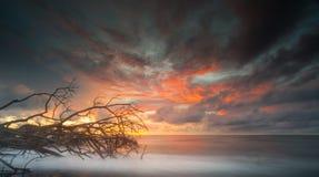 Árvore inoperante em um dia do por do sol Imagens de Stock