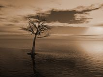 Árvore inoperante em um lago ilustração stock