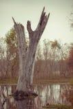 Árvore inoperante em um lago Fotografia de Stock Royalty Free