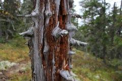 Árvore inoperante em uma floresta Imagem de Stock