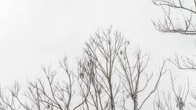 Árvore inoperante isolada imagem de stock royalty free