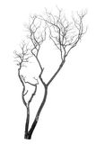 Árvore inoperante isolada fotografia de stock royalty free
