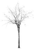 Árvore inoperante isolada foto de stock