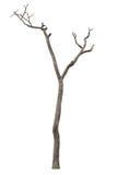 Árvore inoperante isolada no branco fotos de stock royalty free