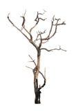 Árvore inoperante isolada no branco fotos de stock