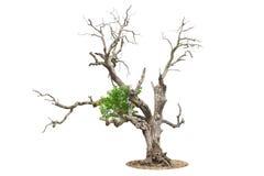 Árvore inoperante isolada no branco foto de stock