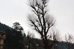 Árvore inoperante isolada no trajeto branco do fundo e de grampeamento fotografia de stock royalty free