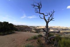 Árvore inoperante na borda do San Rafael Swell Imagens de Stock Royalty Free