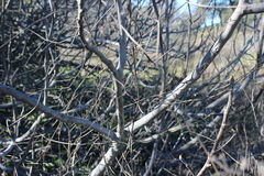 Árvore inoperante na floresta Fotos de Stock