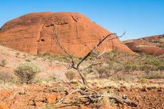 A árvore inoperante na paisagem seca do Território do Norte, Austrália foto de stock royalty free