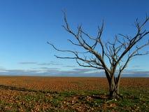 Árvore inoperante na planície de Gibber Foto de Stock