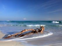 Árvore inoperante na praia imagens de stock royalty free