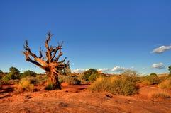 Árvore inoperante no deserto Foto de Stock