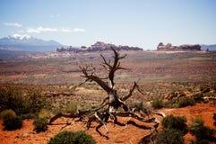 Árvore inoperante no deserto Foto de Stock Royalty Free