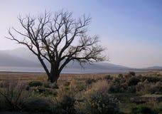 Árvore inoperante no deserto perto do lago foto de stock