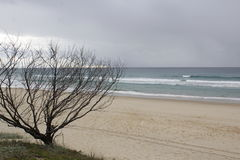 Árvore inoperante no litoral Foto de Stock Royalty Free
