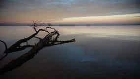 Árvore inoperante no mar Foto de Stock Royalty Free